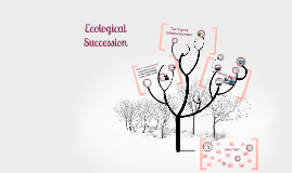 Copy of Ecological Succession
