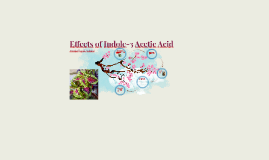 Effects of Auxin