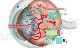 Irrigación del globo ocular y sus anexos