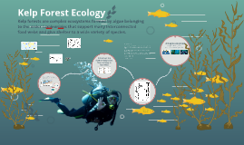 Kelp Forest Ecology
