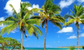 Tropical Allstar Island