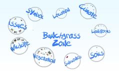 Bunchgrass