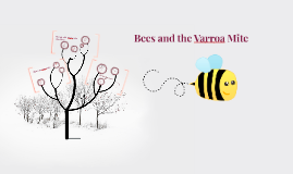 Bees and the Varroa Mite