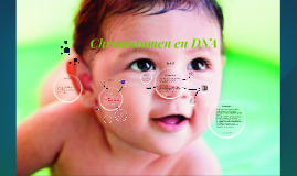 Chromosomen en DNA by Daan en Louis