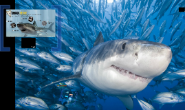Shark Senses