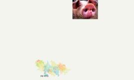 PIG DAY!!