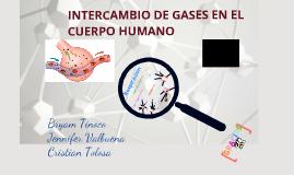 INTERCAMBIO DE GASES EN EL CUERPO HUMANO