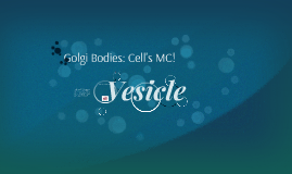 What's a Golgi Body