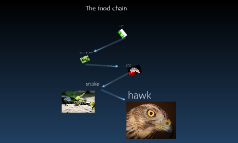 the food chain with picturs
