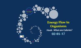 Energy flow in Organisms