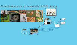Closer look at the animals of Utah biome - 4th grade