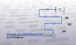 Voyage of a Red Blood Cell