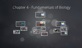 Chapter 4 - Fundamentals of Biology