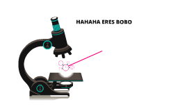 HAHAHA ERES BOBO