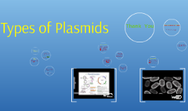 Copy of What Are Plasmids? - Definition, Types, Function & Character