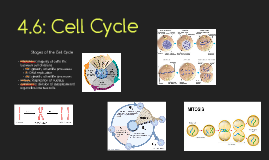 4.6: Cell Cycle