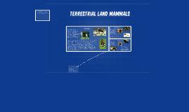 Terrestrial Land Mammals