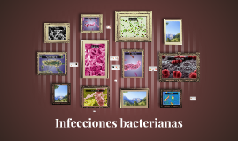 Copy of Copy of Infecciones bacterianas