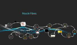 Muscle Fibres