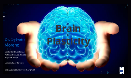 Copy of Brain Plasticity