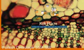 Copy of Kök Hücre