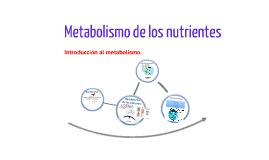 Introducción al metabolismo.
