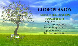 Copy of ESTRUCTURA, FUNCION, FOTOSÍNTESIS