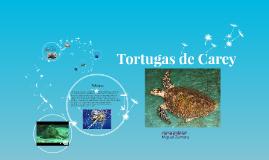Tortugas de Carey