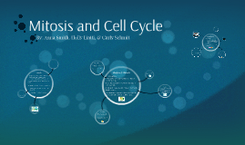 Mitosis and Cell Cycle