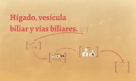 Hígado, vesícula biliar y vías biliares.