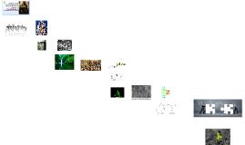 Utilización de las interacciones Planta-Microorganismos