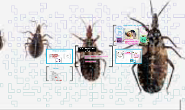 Copia de Copia de Género Trypanosoma