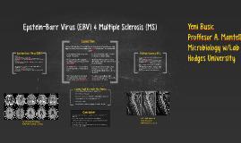 Epstein-Barr Virus (EBV) & Multiple Sclerosis (MS)
