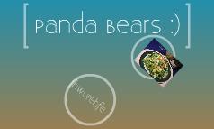 Panda Bears :)