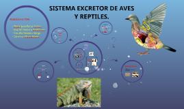 Copy of SISTEMA EXCRETOR DE AVES Y REPTILES.