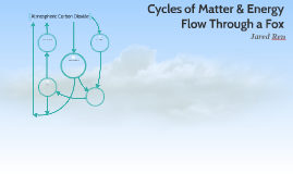 Cycles of Matter & Energy Flow Through a Fox