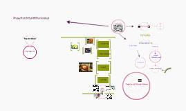 Copy of Proyectos del CAPNº6