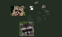 Remarkable Raccoons