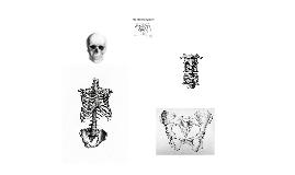 Copy of Human Anatomy - Bones