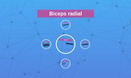 Biceps radial