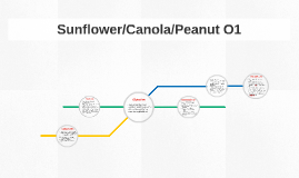Sunflower/Canola/Peanut O1