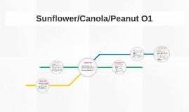 Sunflower/Canola/Peanut O1