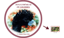 Copy of AVES ENDÉMICAS DE COLOMBIA