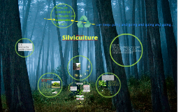 Copy of Silviculture