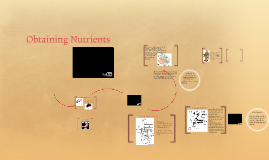 Obtaining Nutrients