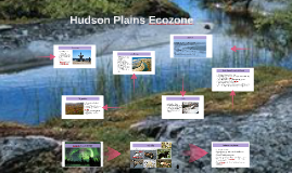 Copy of Hudson Plains Ecozone