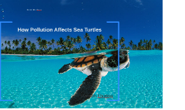 Pollution & Sea Turtles