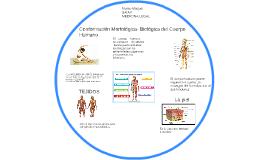 conformación morfológica- biológica del cuerpo humano