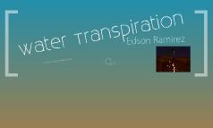 Water Transpiration