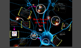 Copy of Mirror Neurons